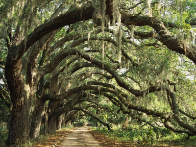 maria-stenzel-ancient-live-oak-trees-in-georgia